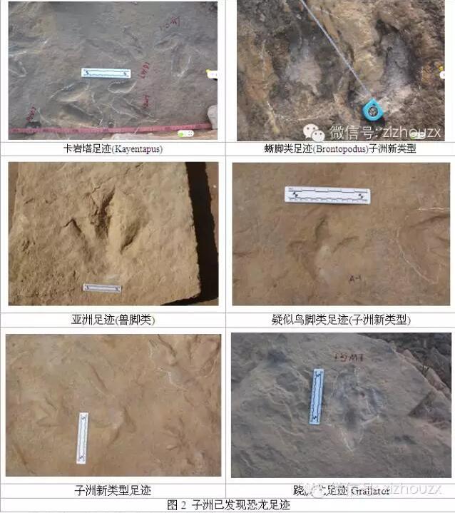 子洲发现恐龙足迹,区域之大世间罕见
