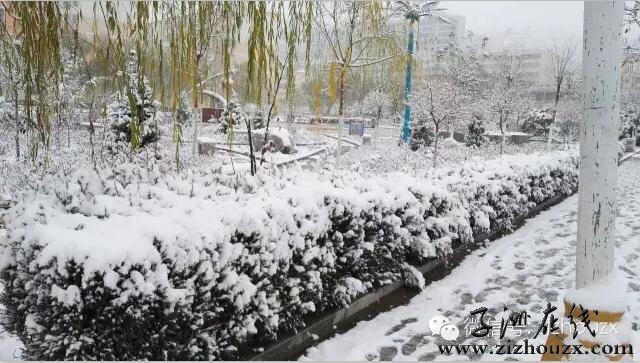 2015年子洲第一场雪(多图)